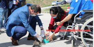 Vali Ayhan, Yavru Kurtları Süt İle Besledi